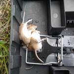 Dubbelslag muizen 2